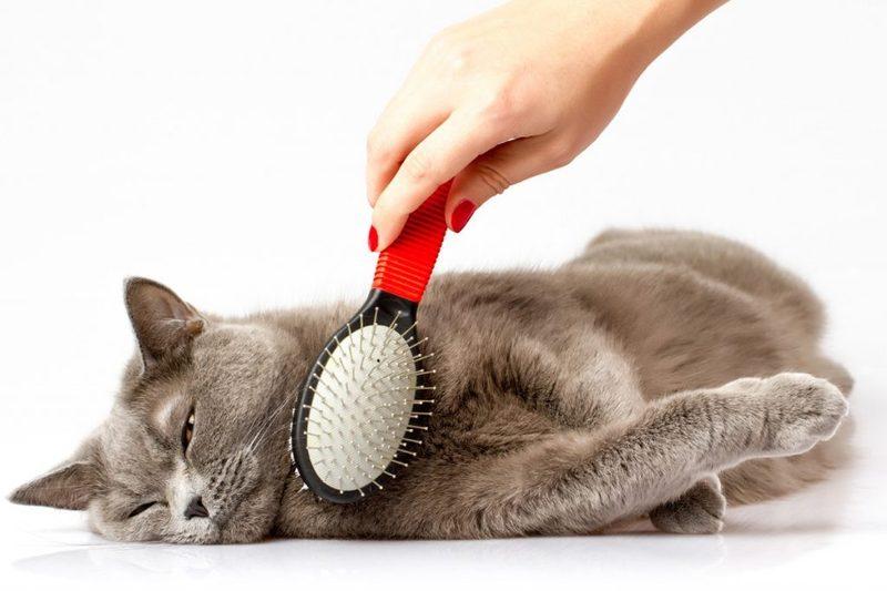 Линька кота - вычесываем правильно