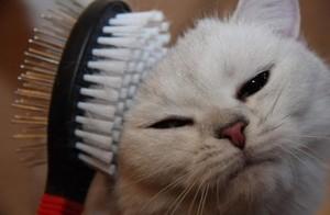Как подобрать щетку для кота