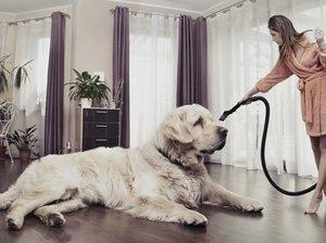 Уборка шерсти в доме, где живет собака