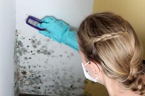 Чем убрать черный грибок с обоев