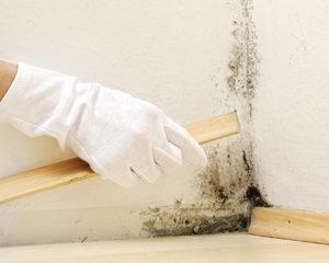 Чем убрать плесень со стены