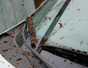 чем отмыть тополиные почки с автомобиля