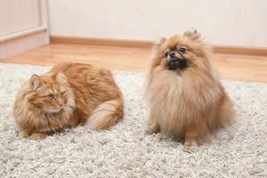 Как бороться с кошачьей шерстью дома